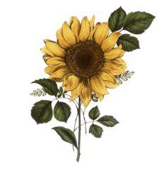 tubes fleurs - (page 4) - Blog de l'ile de kahlan