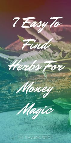 7 Easy To Find Herbs For Money Magic // Witchcraft // Magic // The Traveling Witch Magic Herbs, Herbal Magic, Herbs For Protection, What Is Spirituality, Male Witch, Witch Hazel, Money Magic, Green Witchcraft, Witchcraft Spells