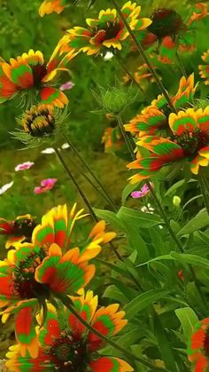 Butterfly flowers'🐛🦋👒 – Famous Last Words Beautiful Flowers Images, Beautiful Flowers Wallpapers, Unusual Flowers, Beautiful Flowers Garden, Amazing Flowers, Beautiful Roses, Pretty Flowers, Flower Pictures Roses, Best Flowers
