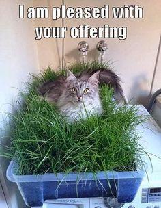 Cat in a Nest of Grass!