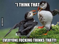 Reaction to the puffin