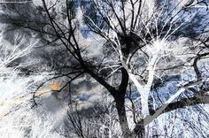 Neu in meiner Galerie bei OhMyPrints: Geisterwald