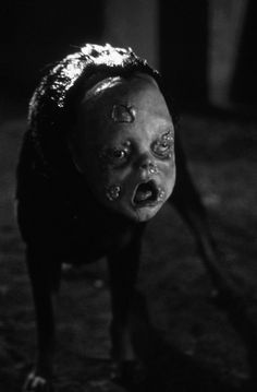 Imagine seeing that in a dark alleyway! It would be hilarious to get a happy go lucky dog that would chase everyone for a good petting, and put this on'im. B)