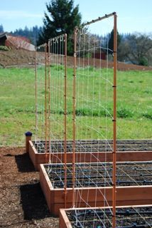 These are the pretty copper trellises we use to in our gardens. You can build your own with our affordable plans at http://www.verduragardens.com/products-store/.
