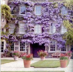 Wisteria, Hanham Court near Bristol in south-west England - Landscape design by Julian and Isabel Bannerman Modern Landscape Design, Modern Landscaping, Garden Landscaping, Landscape Architecture, Beautiful Gardens, Beautiful Flowers, Beautiful Places, Vides, Wisteria