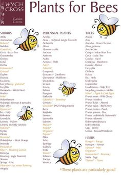 Current farming practices leave bees without enough food year-round. Help give bees something on which to thrive and plant some of these.