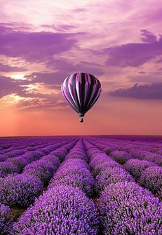 On my bucket list is flying in a hot air balloon. I chose this picture because my favorite color is purple and it looked really pretty. I want to go on a hot air balloon because I want to see the world from above!