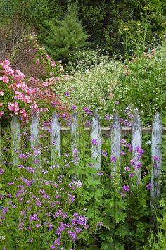 Love gardens that look untouched by human hand.  Photo Sharon's Garden by Shauna Sprunger