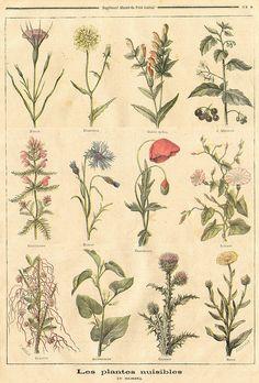 harmful plants || le petit journal 21 mar 1897