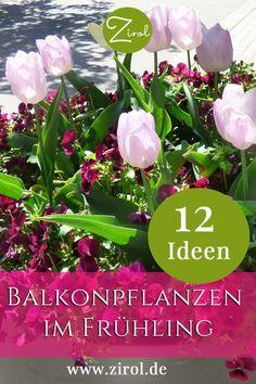 Hier finden Sie Ideen für Ihre Balkonpflanzen im Frühling Rosen Beet, Plants, Balcony Plants, Summer Flowers, Plant, Planets
