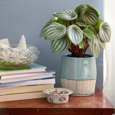 The Watermelon Perperomia, which prefers bright to moderate indirect sunlight, is a great pet-friendly pick and easy to care for. - The Sill, thesill.com