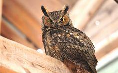 Birds Owls Glance Animals