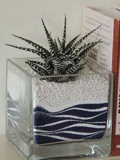 Zebra haworthia with nice sand art