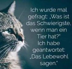 Memes Humor, Funny Memes, Meme Comics, Cute Cats, Funny Cats, Learn German, Rhodesian Ridgeback, Grumpy Cat, E Cards