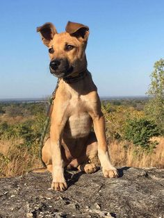 This Tiny Stray Dog Is Helping Save Endangered African Elephants Tiny Puppies, Cute Puppies, Cute Dogs, Big Dogs, I Love Dogs, Wild Life, Canis, Street Dogs, Save The Elephants