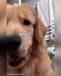 Hey looks like Cinnamon🤗 Source by dog dog memes dog videos videos wallpaper dog memes dog quotes dogs dogs pictures dogs videos puppies puppy video Cute Funny Dogs, Funny Dog Memes, Funny Animal Memes, Funny Animal Videos, Cute Funny Animals, Funny Animal Pictures, Cute Baby Animals, Animals And Pets, Animals Sea