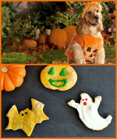 Spook your dog with these easy to make Halloween dog treats!