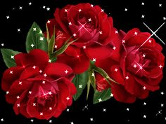 Fresh Flowers for your someone special . Start your each day with fragrance of beautiful flowers. Let's enjoy special discounts on Flowers today. Red Rose Flower, Little Flowers, Fresh Flowers, Rose Pictures, Gif Pictures, Flowers Today, Flowers Gif, Beautiful Red Roses, Hearts And Roses