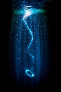 05d45ba5b8 Aquatic adventure  Stunning underwater photos capture mysteries beneath  waves