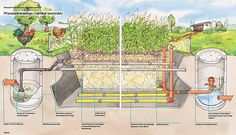 Advanced black water system for best waste management.  I love the reed bed application.