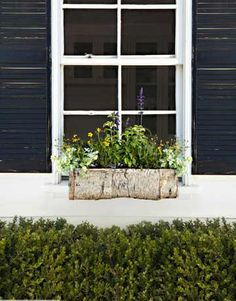 window box ideas...plant herbs in one...kinda like i did with the chives but several..also one with herbs for tea making