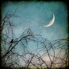 bird in tree, man in the moon, stars crescent winter 8x8 print teal blue fine art print - Hello Moon for $30.00 at etsy.com