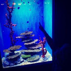 Visitare l'acquario di Barcellona con i bambini