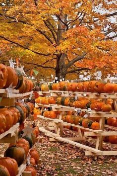 Autumn is a great time for harvest festivals, and the pumpkin festival in Keene, Cheshire County, New Hampshire, USA is a great place to get into the seasonal spirit. It's also a fun time to pick out a pumpkin for making a Halloween jack-o-lantern! Mabon, Samhain, Autumn Scenes, Autumn Aesthetic, Happy Fall Y'all, Fall Pictures, Fall Harvest, New Hampshire, Fall Season