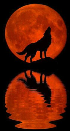 Blood Moon Wolf