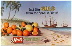 """Hale's location is known as the """"Treasure Coast"""" for a reason! #tbt #1960s"""