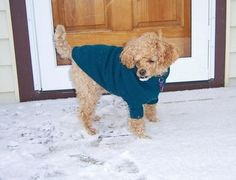 Homemade Dog Sweater Pattern