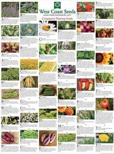 Companion Planting Chart | Companion Planting Chart Lots Of Great Info Video Tutorial