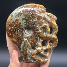 Rare-Natural-Tentacle-Ammonite-Fossil-Specimen-Shell-Healing-Madagascar-213G