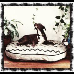 Neat custom dog beds - from Louisiana!