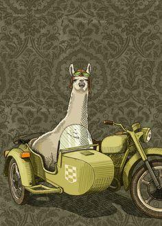 """""""Sidecar Llama"""" by Jason Ratliff"""