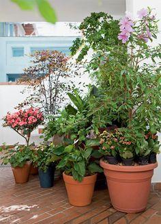 No arranjo de vasos do lado oposto, uma junção de plantas de jardim de vó: antúrios brancos, calâncoes, árvore-da-felicidade.