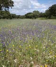 Meadow Near Evora, Portugal. Scott Bergey