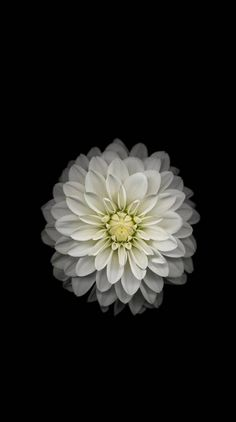 Android Wallpaper - iOS X White Flower Dark Android and iPhone Wallpaper Check more at phonewallp. Flor Iphone Wallpaper, Wallpaper Flower, Beste Iphone Wallpaper, Wallpaper Iphone Disney, Mobile Wallpaper, Wallpaper Ideas, Wallpapers Android, Amoled Wallpapers, Iphone Hintegründe