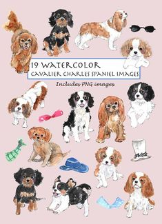 19 elements of hand drawn watercolor Cavalier King Charles Spaniel images. This super cute doggy collection is great for cards, scrapbooking or any digital project you like to. - - - - - - - - - - - - - - - - - - - - - - - - - - - - - - - - - - - - - - - - - - - - - - - - - - - - - - - - - { WHATS King Charles Dog, King Charles Spaniel, Cavalier King Charles, Puppy House, Cute Dogs And Puppies, Doggies, Spaniel Puppies, Dog Life, Watercolor Art
