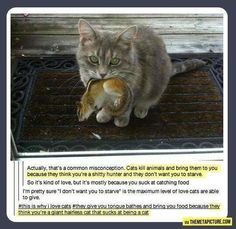They're not wrong...   cats funny pictures