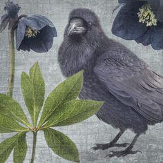 RAVEN FLORA #1 - Fine Art Print, Raven Portrait
