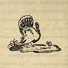 Printable Thanksgiving turkey clip art illustration digital graphic from antique artwork for printing, transfers, and more great uses. Vector version available. Large and high quality, size 8½ x 11 inches. Need this graphic in a larger size? Upscale this graphic to any size without quality loss, contact me for more information. A Transparent background .PNG format version is included free. Shop and save coupon code discount sale  Save up to 50%, see below for ...