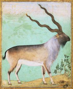 Goats in art: Mughal Miniature Painting Depicting an Ibex
