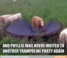 "That's exactly what happened when our 90+ pound yellow lab ""Krow"" used to jump on our trampoline too...lol"