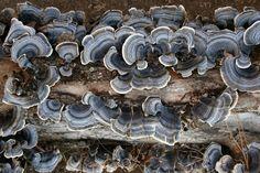 fungus :: info@courtsgardengallery.com