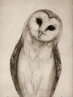 Barn Owl Sketch Art Print - Isaiah K. Stephens: