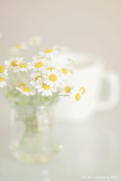 Daisies, the best flowers simple but beautiful and elegant