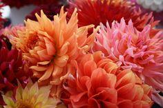 Orange/red/pink/yellow hues!