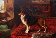 Click to see full size: Rough Collie- rough Collie