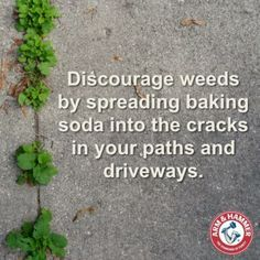 Weed killer: Discourage weeds by spreading baking soda into the cracks in your p… Weed killer: Discourage weeds by spreading baking soda into the cracks in your p…,Lawn Care Weed killer: Discourage weeds by. Garden Weeds, Garden Planters, Garden Yard Ideas, Lawn And Garden, Outdoor Plants, Outdoor Gardens, Organic Gardening, Gardening Tips, Weed Killer Homemade